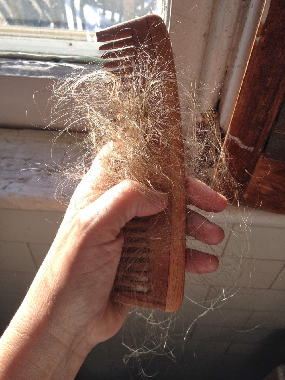 A comb with a bunch of blond hairs. That used to be in my head.