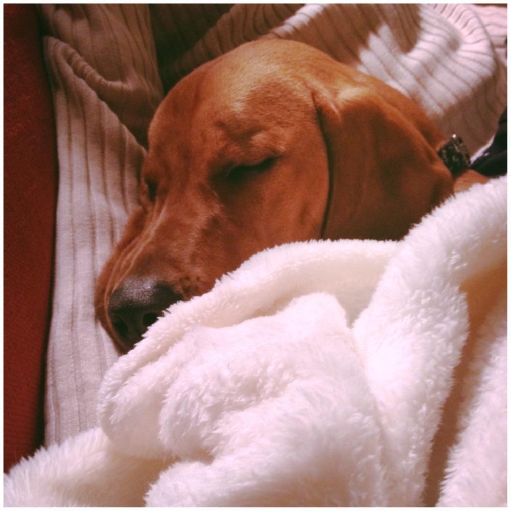 sleeping dog lie