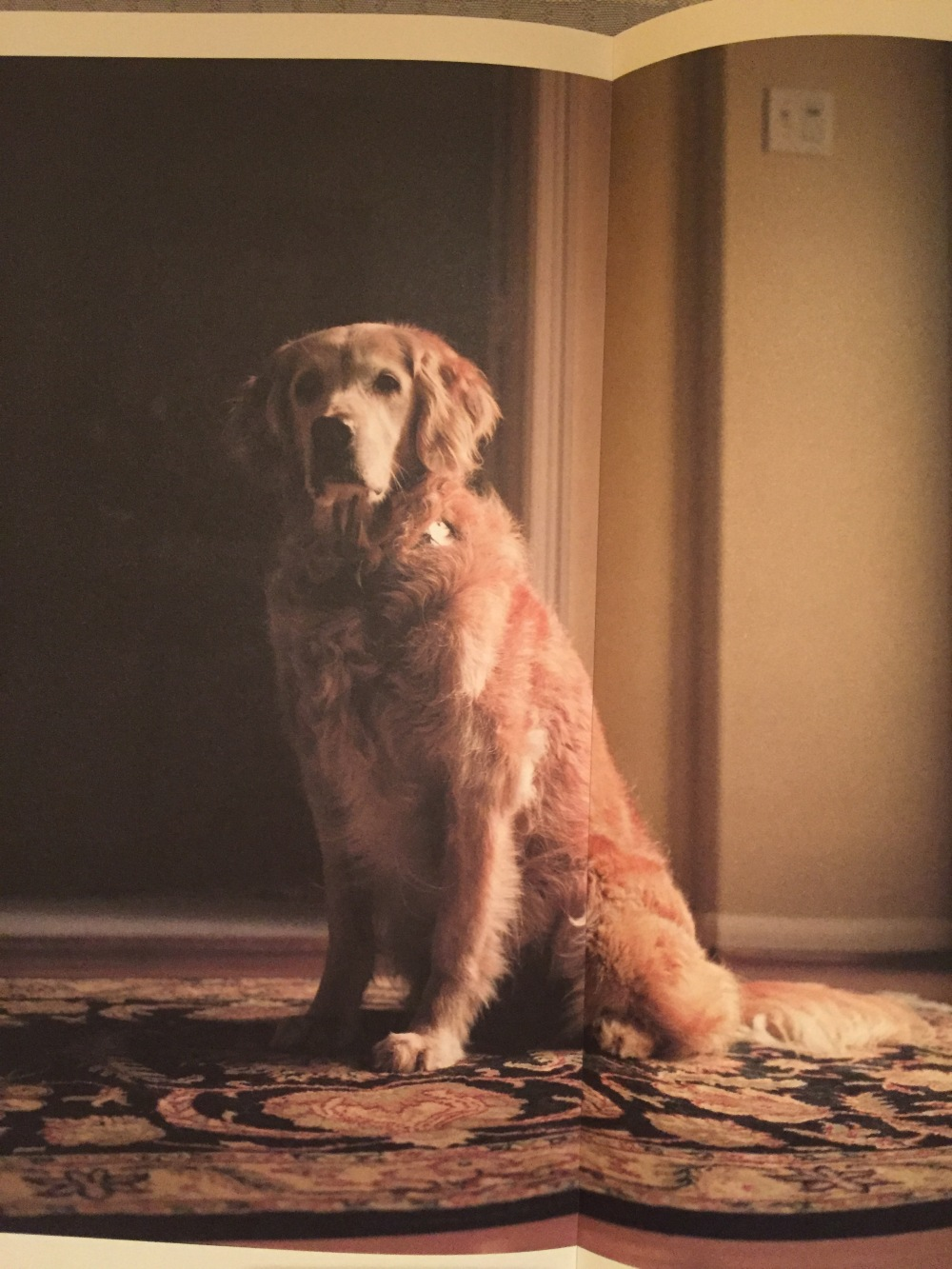 "Bretange, 9/11 rescue dog. From the book ""Retrieved"" by photographer Charlotte Dumas."
