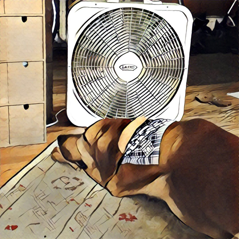 A very hot dog takes advantage of the box fan.